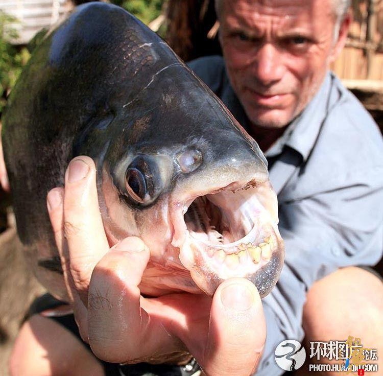 英国男子捕获大型食人鱼曾咬死多名渔民