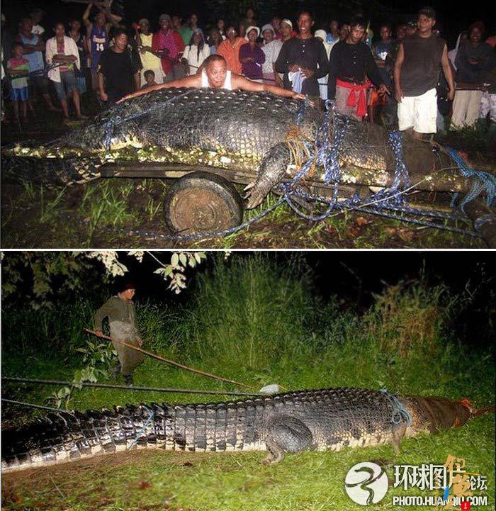 菲律宾居民活捉巨型鳄鱼长6.4米重逾1吨