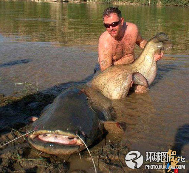英国垂钓者西班牙捕获84公斤巨型鲶鱼