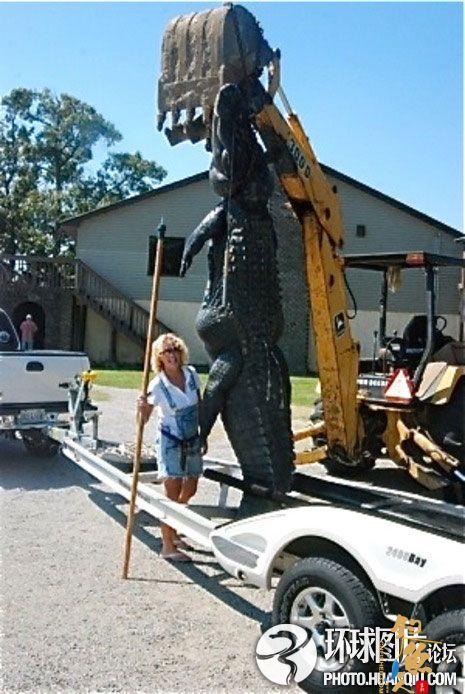 美国女子捕获巨型鳄鱼身长4米重近千斤