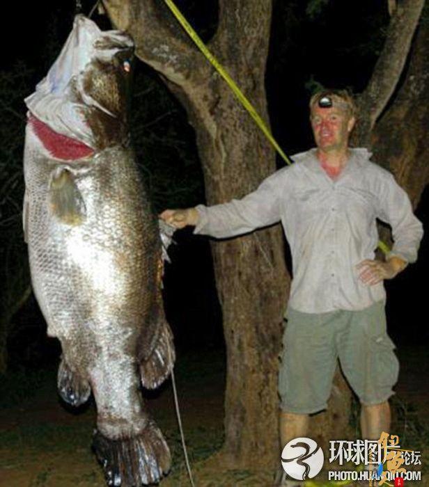 英国男子从鳄鱼口中夺回巨型鲈鱼
