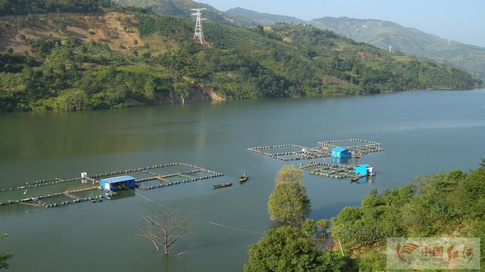 云南水环境,关注马堵山水库污染系列的报道