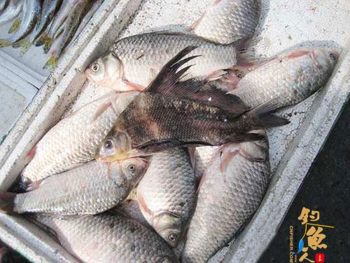 江城市场现怪鱼 市民担心不敢买