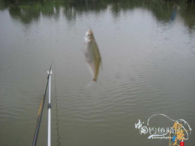骑车钓鱼《钓鱼日记》 5图