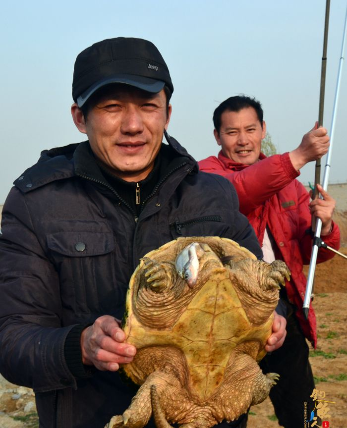 一只5公斤鳄龟嘴含小鱼在马河水库被钓起  鳄龟咬住鱼不松口 组图
