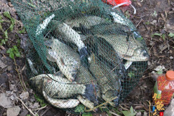 枞阳海螺公司组织开展职工钓鱼活动 图