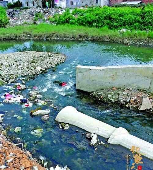 惠州海洋环境形势不容乐观 黄埠排污口水质极差 去年海龟上岸产卵仅两只