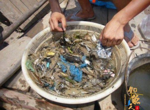 浙江乐清湾重大污染频发鱼虾死亡 近海捕鱼似大海捞针
