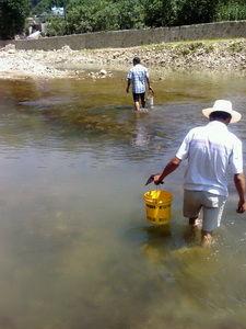 被农药毒死的鱼还能吃???    承德村民往河里灌农药