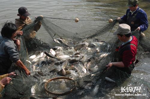 第二届曹妃甸湿地渔乐节精彩呈现 秋风唤 鱼蟹欢