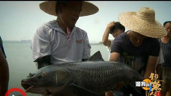 四海太阳城信誉频道太阳城信誉视频《渔我同行》217胶州觅青