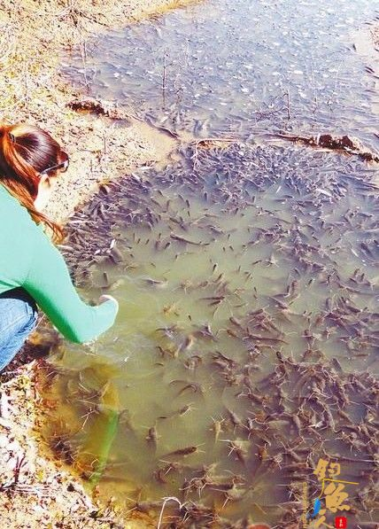 钓鲤鱼徒手抓鲇鱼 体验乡村生活 在乐不在鱼  图