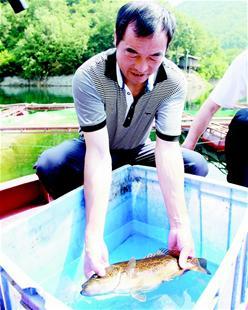 水中贵族:黄龙鳜鱼