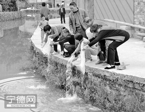 蕉城市民自发组织前往周宁鲤鱼溪放生鱼苗 图