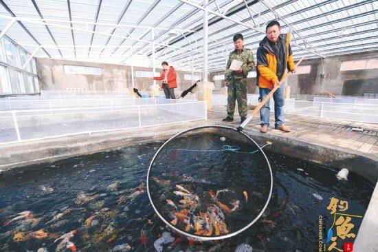辽宁沈阳:依靠锦鲤 生产观赏鱼产品 成为特色渔业新亮点