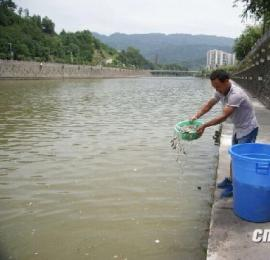 宁强县钓鱼爱好者放流鱼苗6千尾 维护天然水域生态环境