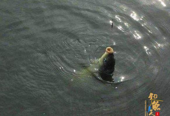 秋天钓鱼不可不知的钓鱼窍门!