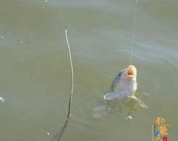 什么是钓接口?打接口的钓鱼技巧!