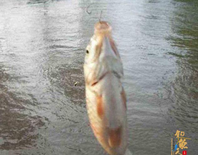 秋天钓鱼,如何选择合适的鱼饵???