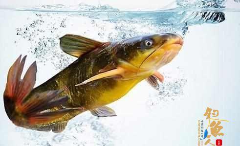 老钓者7年总结的经验,钓鱼时鱼儿为什么会中止吃钩?