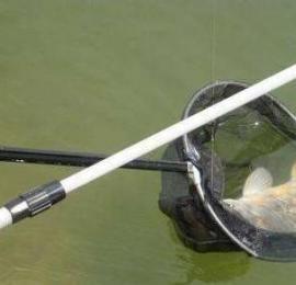 抄进抄网的鱼为什么会飞出去