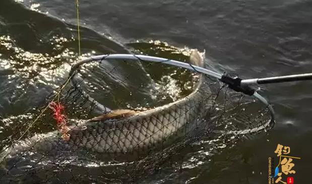 """钓鱼的操杆""""四不要""""---一些刚刚学习钓鱼的新手"""