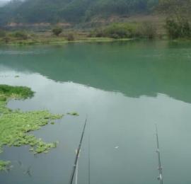 升钟湖山泉水钓鱼, 那鱼肚子里面没有黑膜,附升钟湖美景
