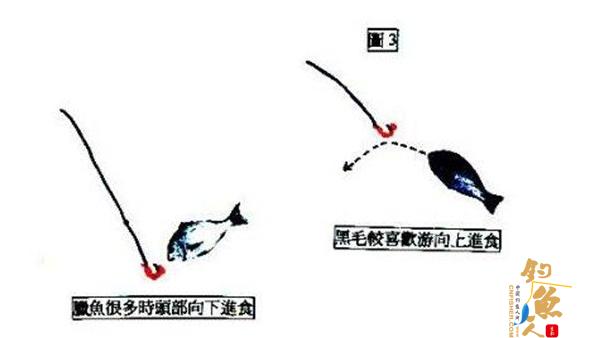 图解矶钓晃饵的鱼类视觉判断与进食行为