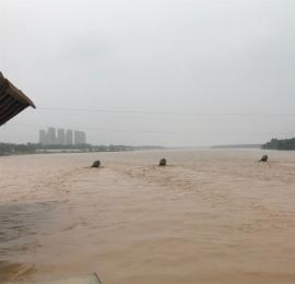 危险!洪峰来袭 黄河边有人钓鱼 有人带孩子戏水