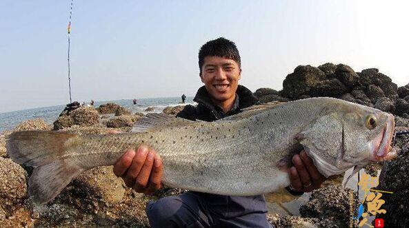 海鲈鱼的垂钓选时选点与用饵技巧