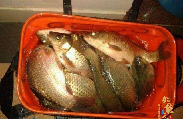 别人打窝我们钓鱼,钓起15斤野生大鲤鱼,这次钓鱼真过瘾