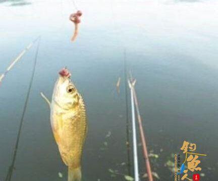 使用蚯蚓钓鱼时,钓友常犯的2种错误,将直接影响你的渔获