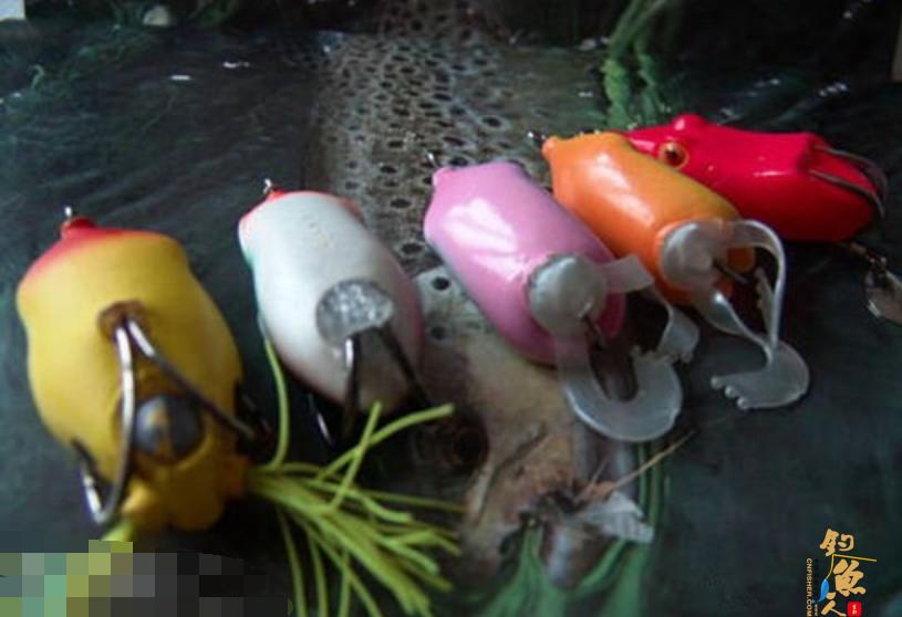 雷强钓法之图解雷蛙的选用