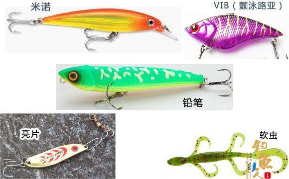 路亚海鲈的五个实用技巧详解