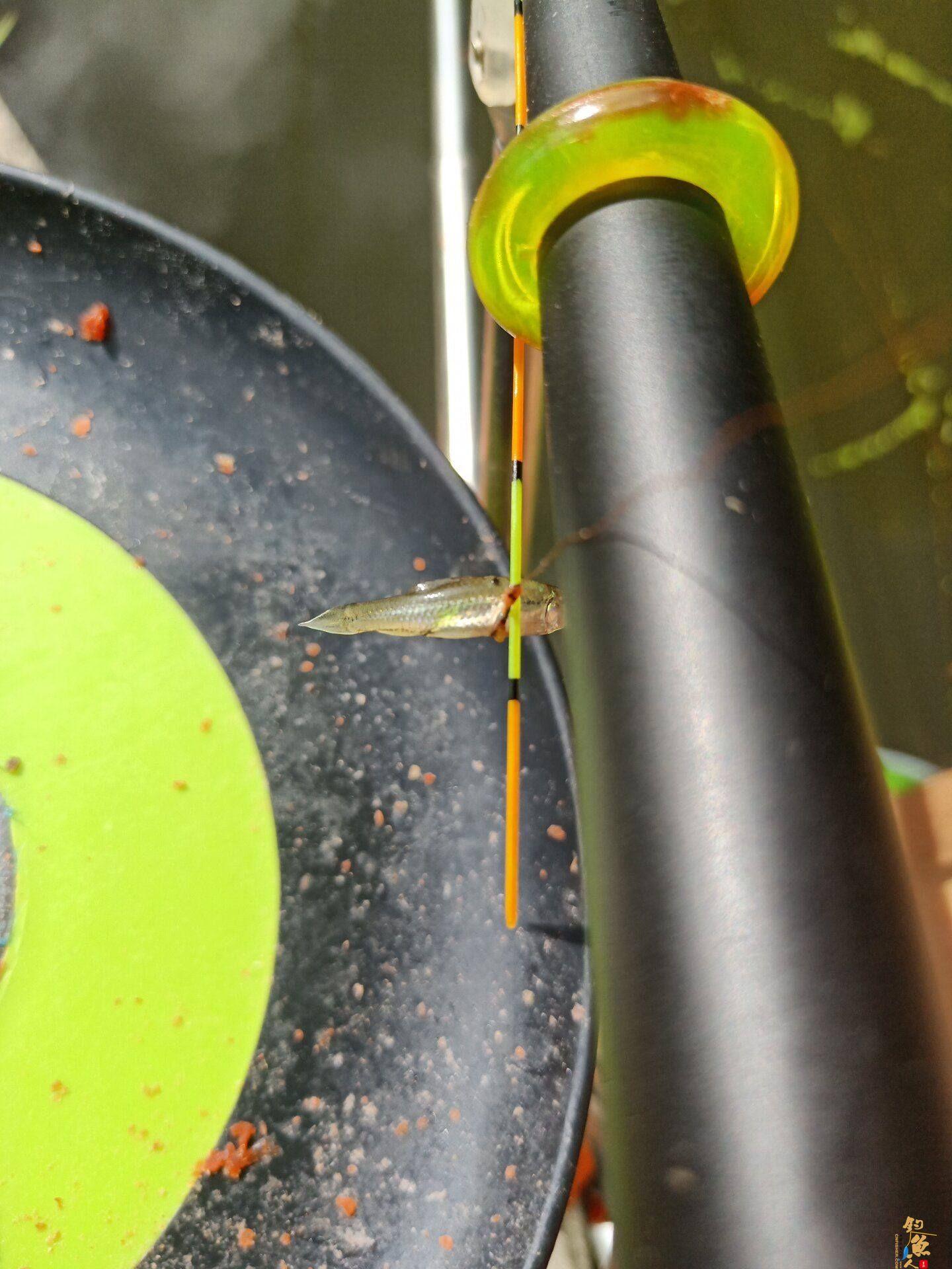 28偏19的猎鲟就打了这么大的鱼,这是要断竿的节奏啊!