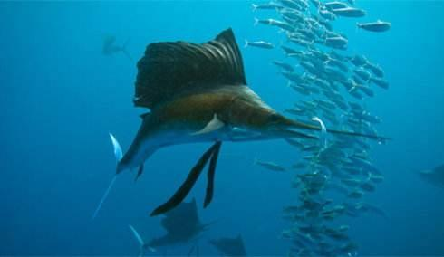 海钓需要遵循的基础规律有哪些?