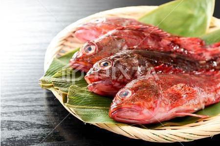 海钓中,石九公鱼的钓法与技巧