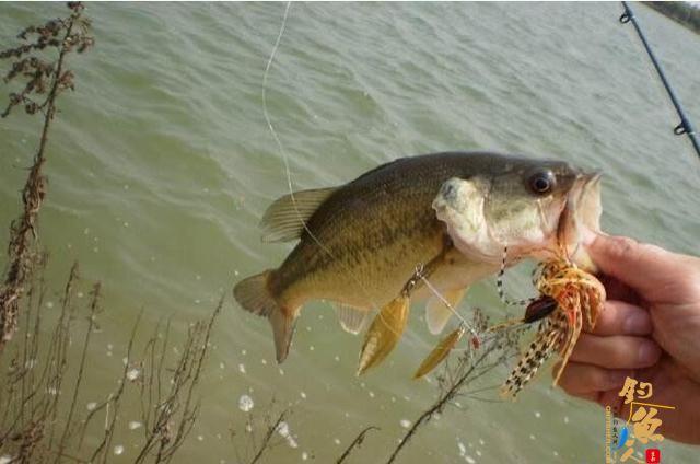 路亚鲈鱼最好的时间是什么时候?高手来分解