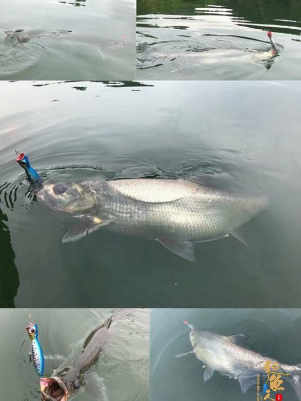 路亚鲈鱼,哪些标点能上鱼?