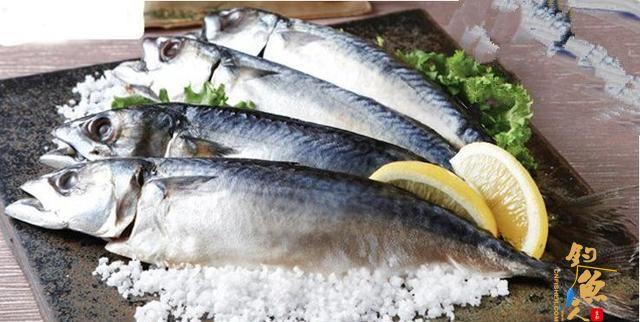 如何海钓鲜美的鲐鲅鱼?