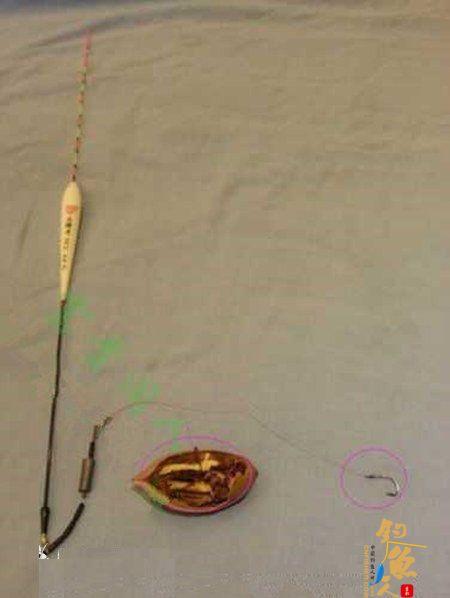 台钓鲢鳙鱼的三种自创调漂方法 图5 钓鲢鳙的饵料问题