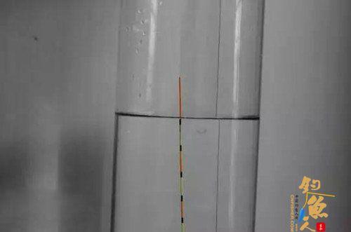 简单通用的台钓调漂方法 二、挂双饵测目