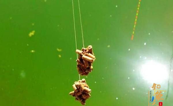 麻团钓,包食钓,浮漂应该怎么调漂