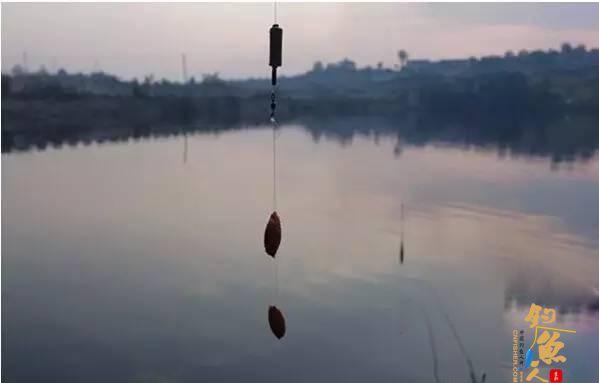 挂饵找底是挂上钩还是下钩,这是由鱼情决定的